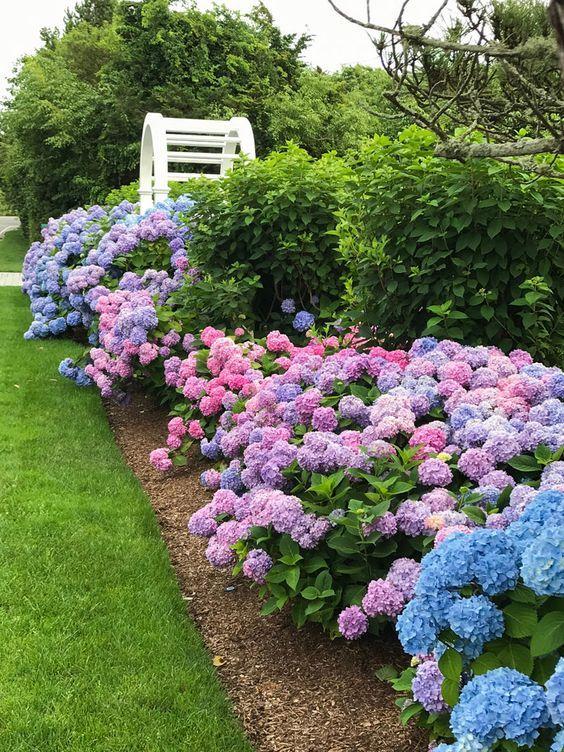 Spravny Cas Na Hortenzii Ktera Zbarvi Ne Jen Zahradu Homeincube Hydrangea Landscaping Beautiful Gardens Hydrangea Flower Bed