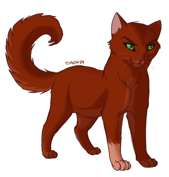 Warriors Erin Hunter Squirrelflight: Don't Know Which Cat This Is Supposed To Be (Redtail