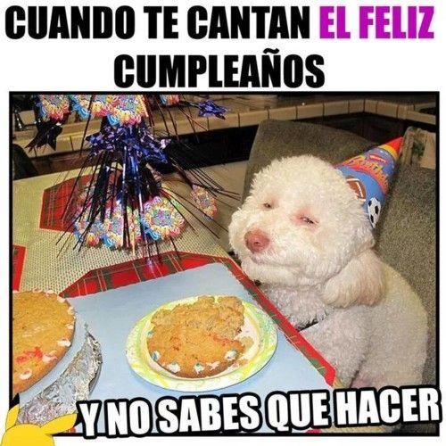 Cuando Te Cantan Feliz Cumpleanos Perro Happy Birthday Dog Happy Animals Dog Birthday