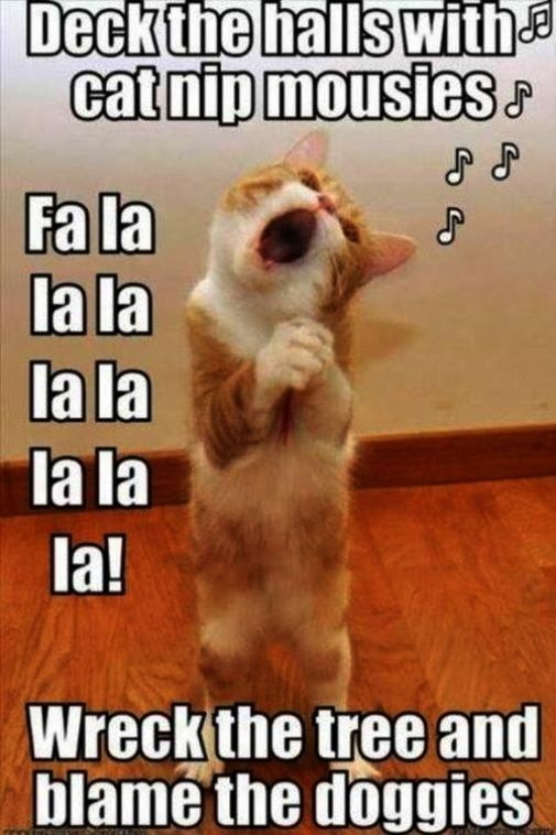 Cute Evil Kittens Cute Cats Playing Funny Animal Quotes Animal