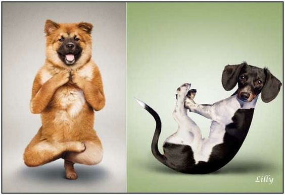 Yoga for dogs