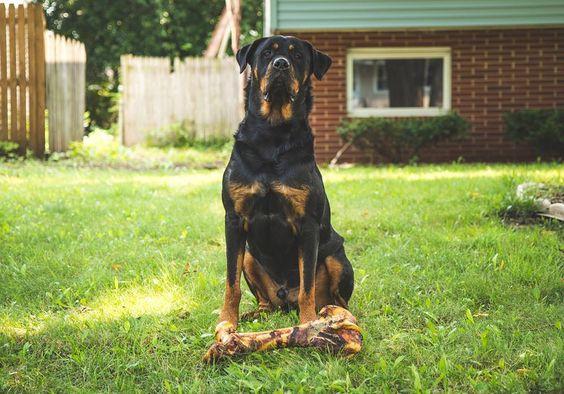 Rottweiler.jpg (960×672)