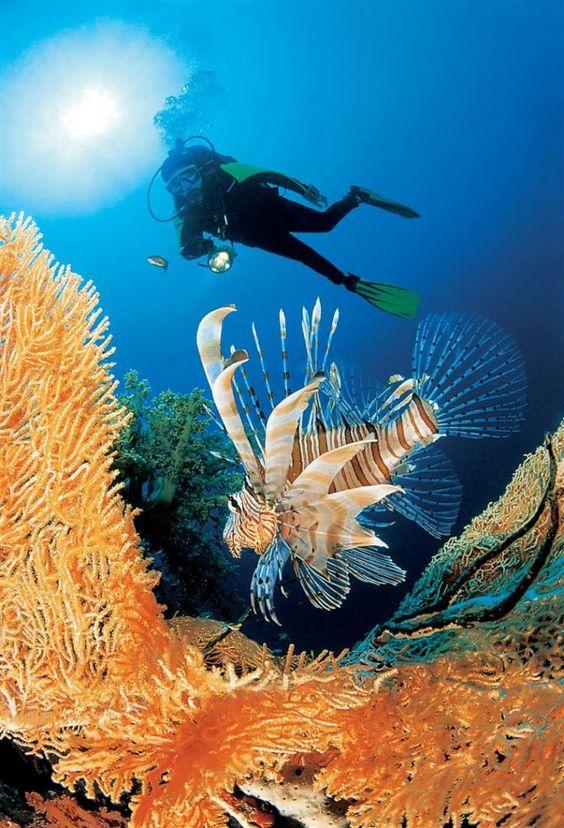 El Mar rojo, Viajes de Lujo en Egipto http://www.espanol.maydoumtravel.com/Viajes-y-Tours-a-Egipto/4/0/