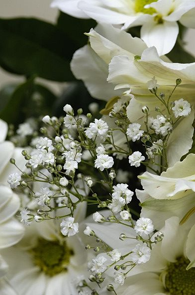 Magic Close-ups of Flowers