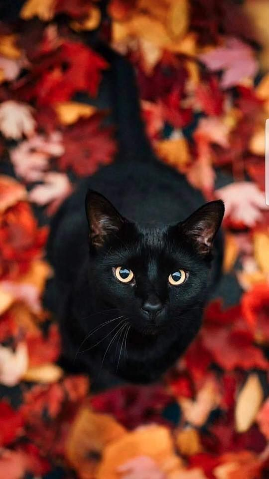 Pin By Emsss On Widget Fall In 2020 Animals Cute Cats Cats