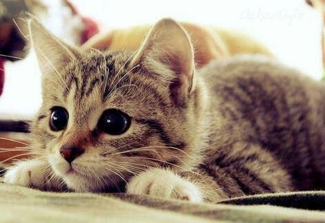 Cute cat with beautiful eyes