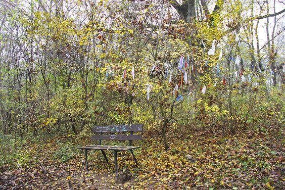 Скамейка на поляне у Камня Лжи. Фото: Evgenia Shveda