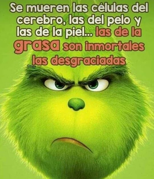 Siiii Desgraciadamente Asi Es Funny Good Morning Memes Funny Spanish Memes Grinch Memes