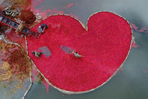 Cranberry heart
