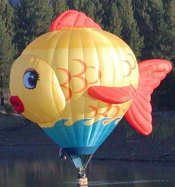 2013 balloon welcome the giant goldfish sushi as she for Flying fish balloon