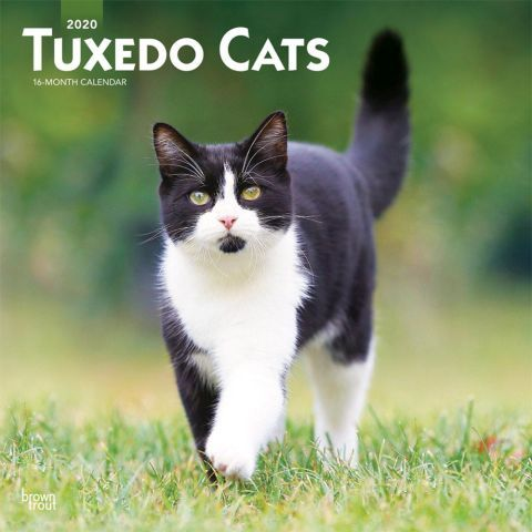 Tuxedo Cats 2020 Calendar If You Re Looking For An Effortless