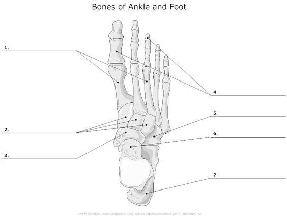 22 best images about Bone assessment on Pinterest | The skulls ...