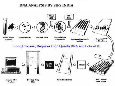 Forensic crime scene analysis Department of Education- SIFS INDIA - dna analyst sample resume