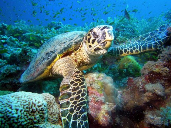 Sudan Liveaboard Diving Holidays with Diverse Travel