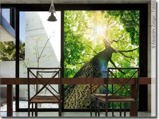 Glasdruck Baum Fensterscheiben Baum Glas