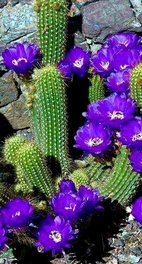 Flores de Lindo Color 🌵