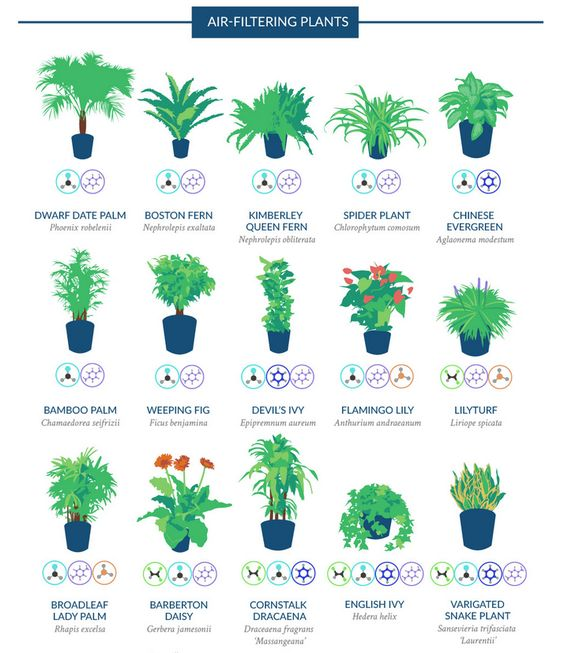 18 Houseplants That Help Purify Your Home 39 S Air Home