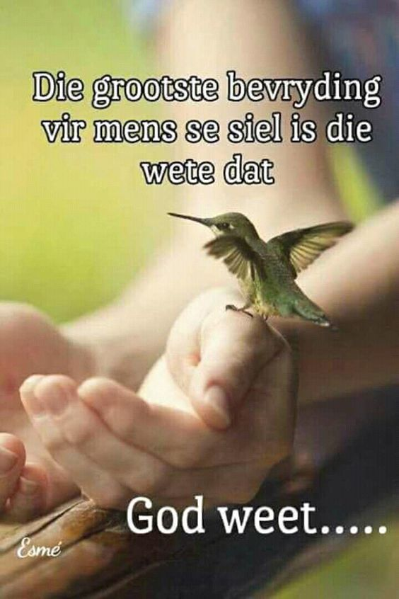 Pin By Anne On Afrikaans How To Start A Blog Wordpress Hummingbird Wallpaper Blogger Help