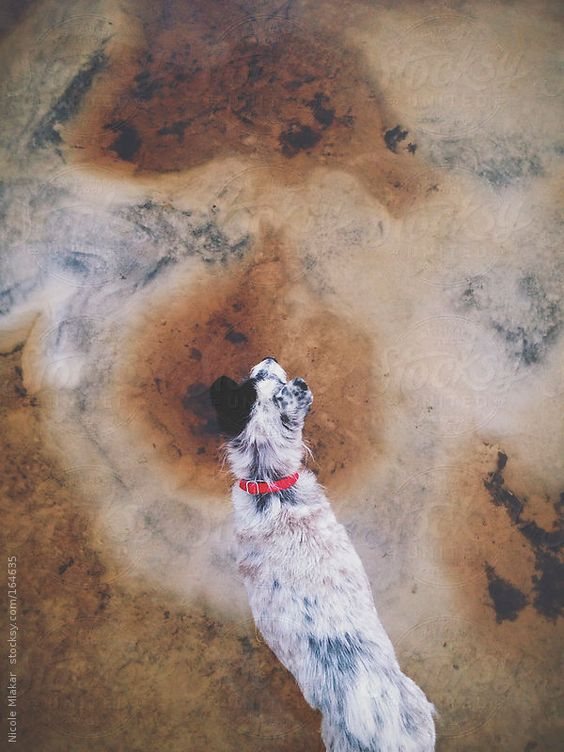 Looking down on Terrier dog standing in sand by nicolemlakar | Stocksy United