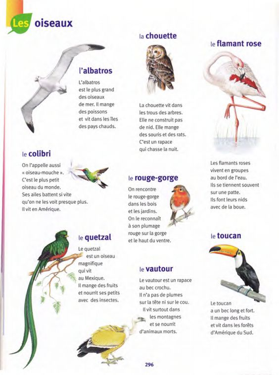 Pinterest le catalogue d 39 id es for Nom des oiseaux