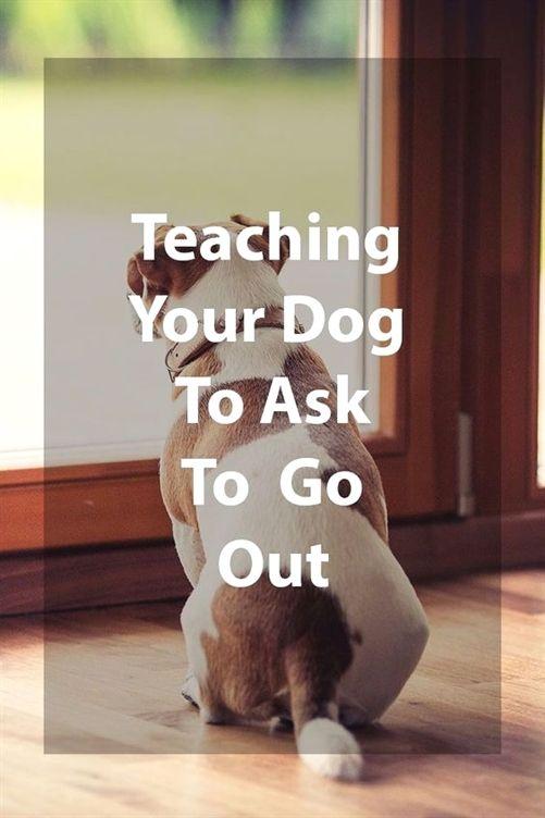 Dog Training Ideas Dog Training Queens Dog Training 77802 Dog