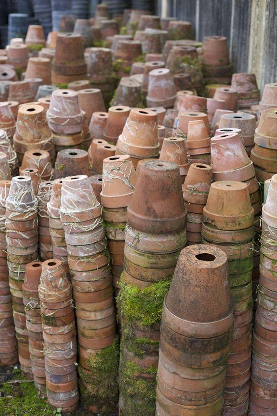 terracotta pots: