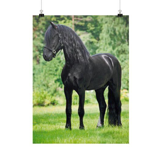 Black Beauty - Vertical Fine Art Prints (Posters)