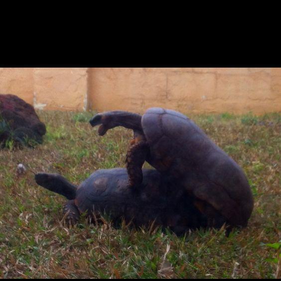 Turtle love!