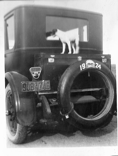 Jack Russell Puppy Hitching a Ride (1924 - California)