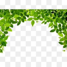 Leaves Border Plant Green Youth Png And Vector With Transparent Background For Free Download Leaf Clipart Leaf Border Leaves