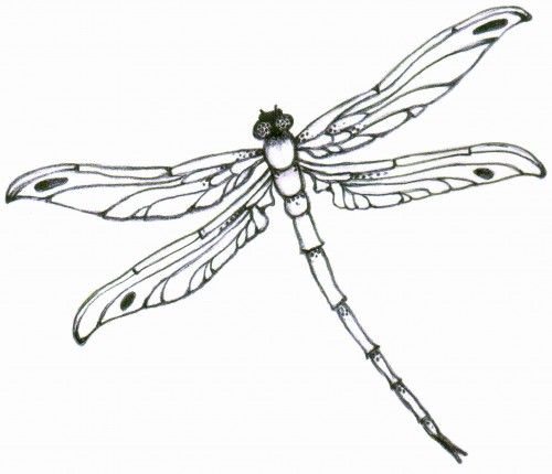 Dragonfly Tattoo Line Drawing : Dragonfly tattoo design see more designs on http