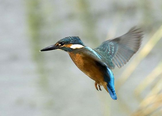Pássaro voando