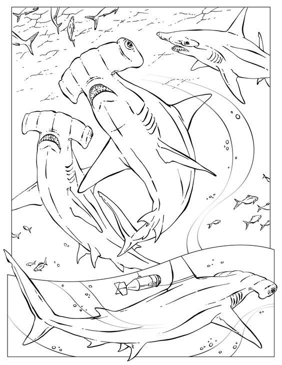 Hammerhead sharks colouring pinterest requin marteau - Modele dessin requin ...