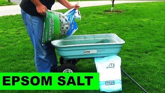 6 Effective Homemade Lawn Fertilizers That Are Safe From Hazardous