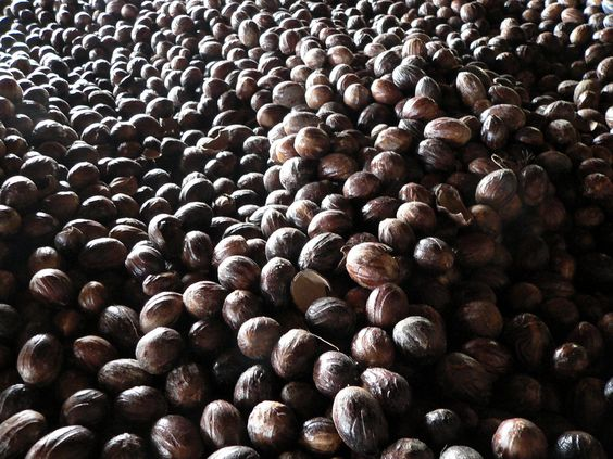 Noz Moscada (Myristica fragans): Descrição, Cultivo, Uso Culinário