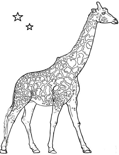 Giraffe Coloring Page Giraffe Coloring Pages Elephant Coloring Page Animal Coloring Pages