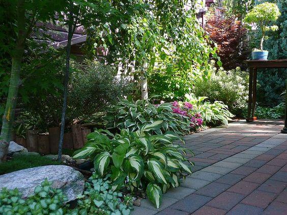 Japanese Maple Garden Design