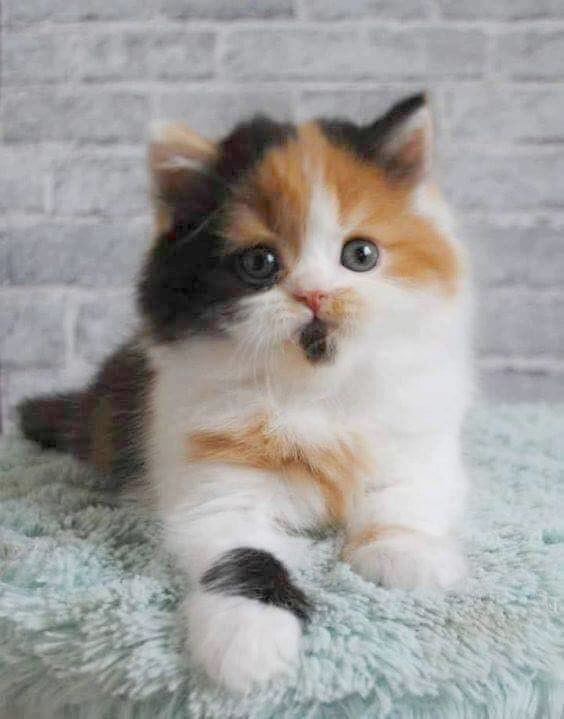 Susse Katze Und Hund Bild Kostenlose Paar Wie Susse Tiere Zeichnen Fun2draw Entweder Susse Cute Cats And Kittens Bild Cats Susse Tiere Tiere Susse Katzen