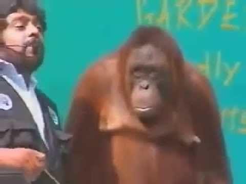 Magician does magic tricks with Orangutan