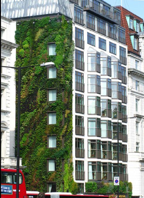 Paredes Verdes - Os Jardins Verticais invadiram as cidades!!!
