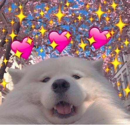 Pin De Alee U En Memes V Memes Lindos Amor Lindo Memes De Animales Tiernos