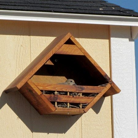 Dove nesting in one of our customer's dove houses ...