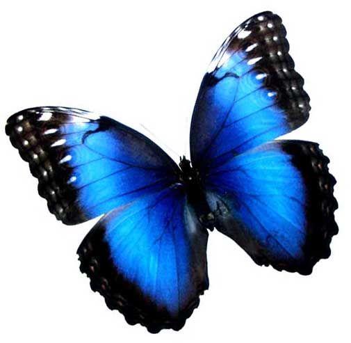 21 mooie kleurrijke vlinder - photo #11
