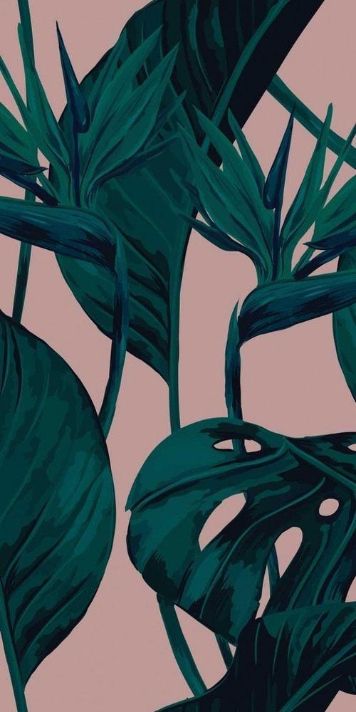 Bird Of Paradise Blush Leaves Wallpaper Iphone Tropical Wallpaper Paradise Wallpaper