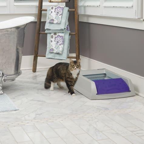 Scoopfree By Petsafe Self Cleaning Litter Box In 2020 Self Cleaning Litter Box Automatic Litter Box Litter Box