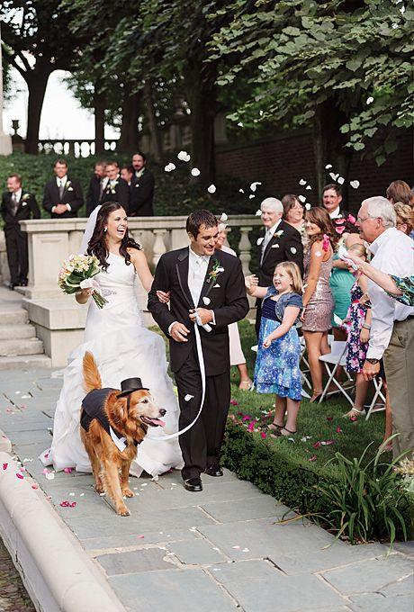 Cão no casamento: