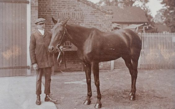 The story of Cupid, a bay mare from Essex, who for more than three years rode back and forth from the trenches in France, trekked across the Sinai desert and dodged shellfire during bloody battles for Gaza.