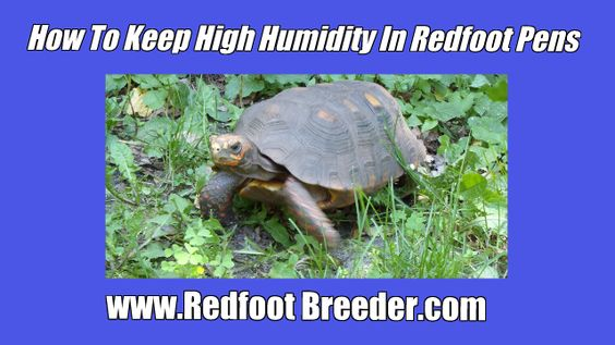 Want to know how easy it is to keep the humidity high in your Redfoot pen?