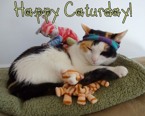 Happy Caturday! ~Celebrate National Cat Day on Oct. 29th  <img src=