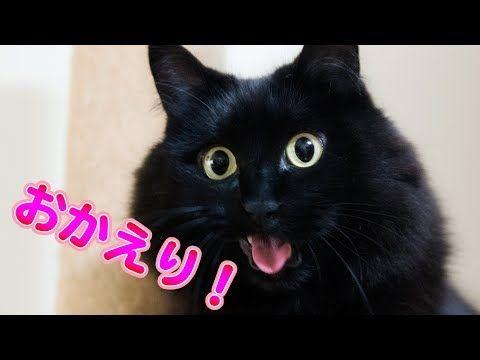 動画 猫 しゃべる